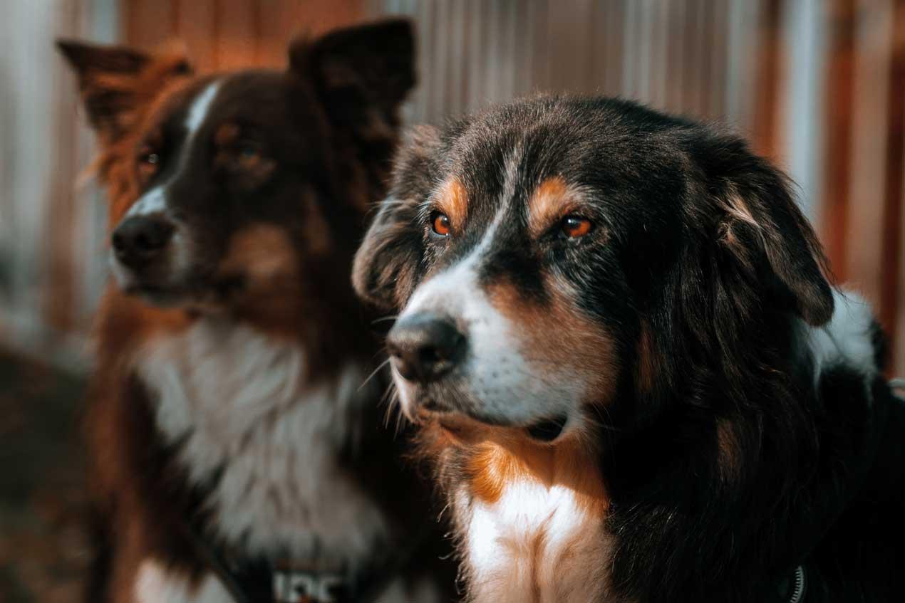 Klare Haltung - Tierarzt am Paulshof